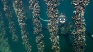 Havet under havoverfladen. Maritime Nyttehaver.