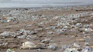 Forurening langs kysterne