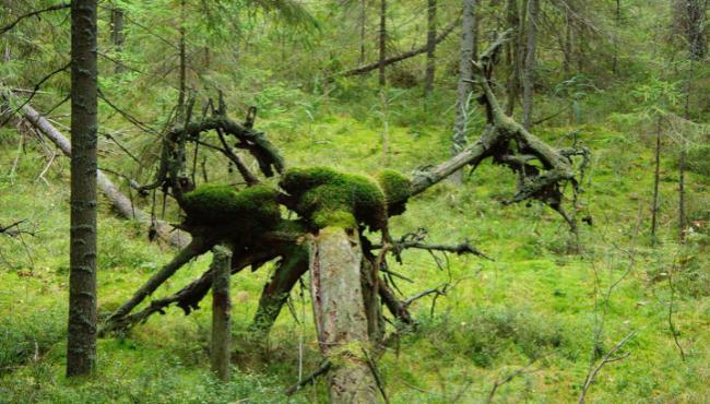 Naturens Rige har FSC-certificeret skovene