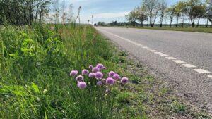Der er grøde i sommervejret - det har givet travlhed langs vejene