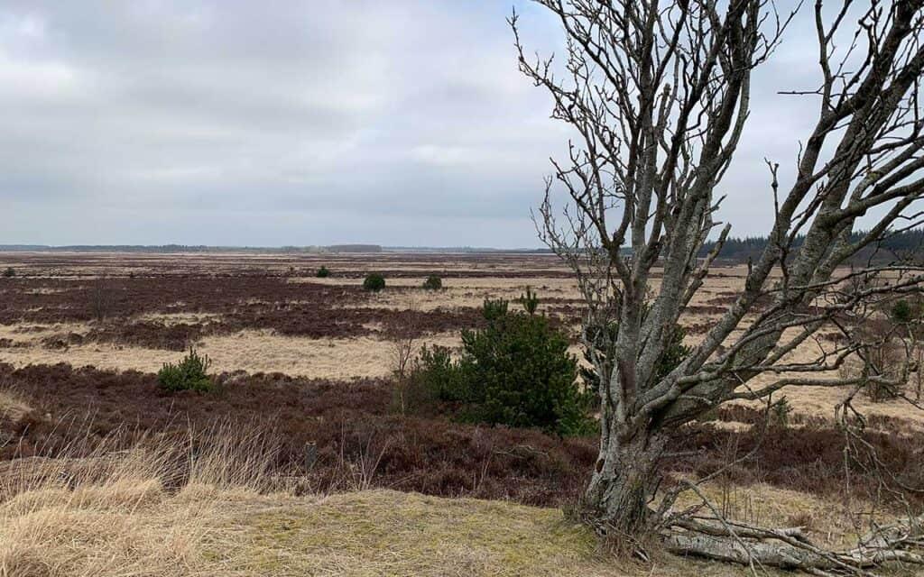 Ministerbesøg sætter Naturnationalpark Skjern Å på landkortet
