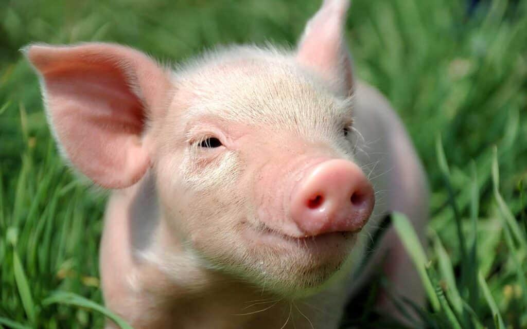 Glade grise og vild natur på lukkede minkfarme i Vores Vilde Vestjylland