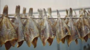 Den traditionelle Tørrede Dabs dag i Hvide Sande er endnu en gang ramt af coronaens skygge