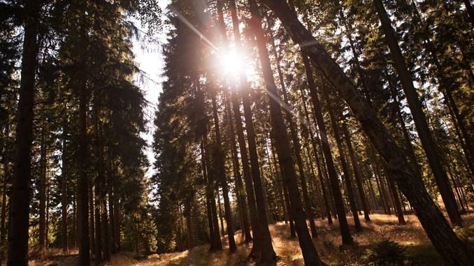 Nu kan danskerne være med til at placere de næste ti naturnationalparker foto: Tobias Markussen Gribskoven Kulsvierstenen4